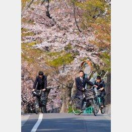 取材時には桜が…/(C)日刊ゲンダイ