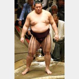 学生相撲出身がネック/(C)日刊ゲンダイ