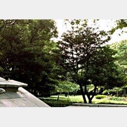 うっそうと繁る代々木公園/(C)日刊ゲンダイ