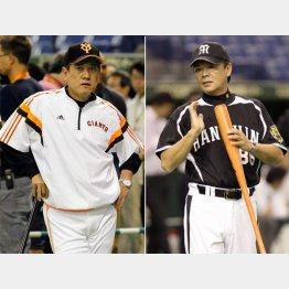 両チームはグラウンド外でも火花/(C)日刊ゲンダイ