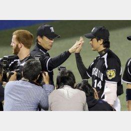 能見の好投で2位広島に1.5差に/(C)日刊ゲンダイ