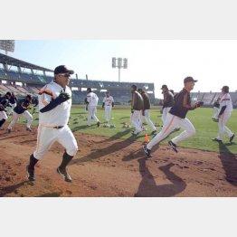 プロ野球のキャンプは「4勤1休」、繁華街に繰り出す選手も…/(C)日刊ゲンダイ