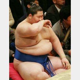 12日は稀勢の里に圧勝した逸ノ城(C)日刊ゲンダイ