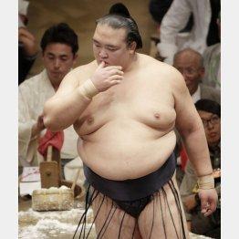 春場所8日目は照ノ富士を寄り切った(C)日刊ゲンダイ