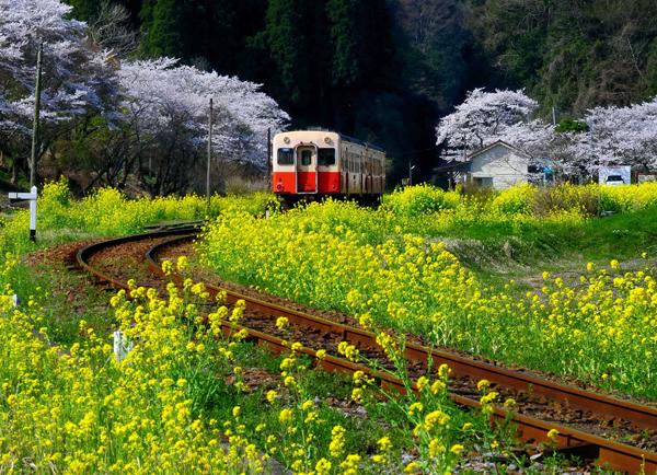 ディーゼル車に揺られながら(写真提供:小湊鉄道)