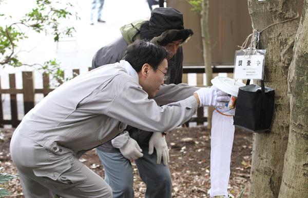 昨年、代々木公園で蚊を採取する仕掛けを取り付ける都職員(C)日刊ゲンダイ