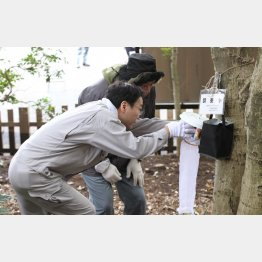 昨年、代々木公園で蚊を採取する仕掛けを取り付ける都職員