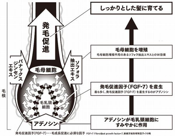 「アデノシン」には3つ効果が(資生堂提供)