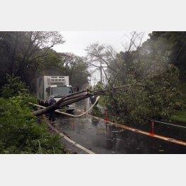 2011年台風15号でへし折られた街路灯と樹木