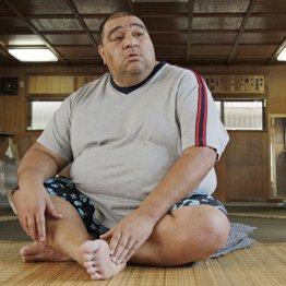 期待の若手、相撲界に直言
