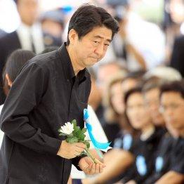 沖縄慰霊の日に献花をする安倍首相(C)日刊ゲンダイ