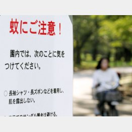 蚊に刺されない人はいない(C)日刊ゲンダイ