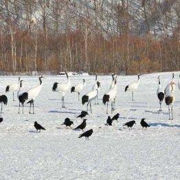 体験移住 4年連続北海道ナンバーワン「釧路」