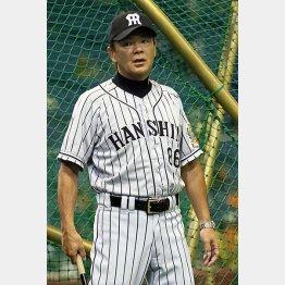 和田監督は今季限りで退任(C)日刊ゲンダイ