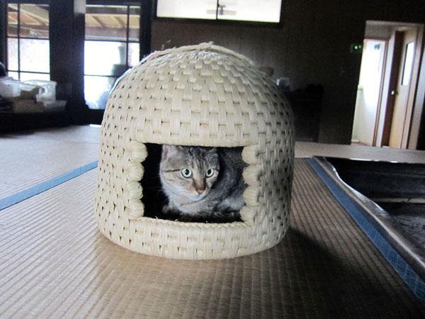 「猫ちぐら」(提供写真)
