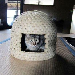 愛猫家がうなる 職人は30人 6年待ちのちぐら
