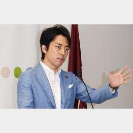 入閣要請を断ったという小泉進次郎氏(C)日刊ゲンダイ