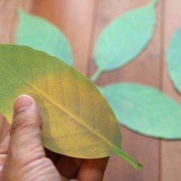 【Leaf(リーフ)】室温の変化が葉の色でわかる