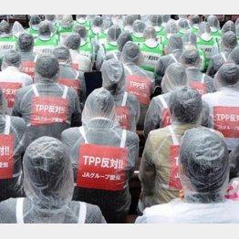 TPPに反発する農業団体の集会の様子(C)日刊ゲンダイ