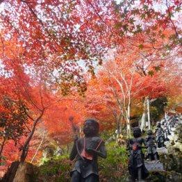 真っ赤な紅葉がキラキラ<大山>