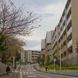 【汐見台】50年前から開発されている特別エリア