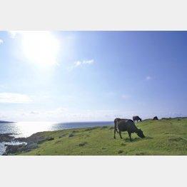 畜産農家の牛の世話体験も(HPから)