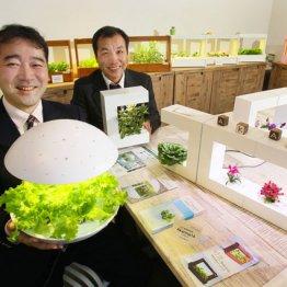 照明器具メーカーがLEDで野菜づくり