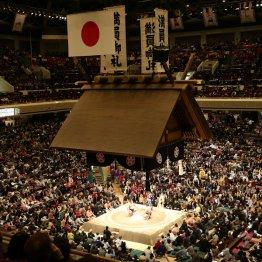 大相撲の解説は特にひどいと苦言が(C)日刊ゲンダイ