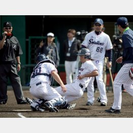 新ルールに沿って本塁クロスプレーを練習するヤクルトナイン(C)日刊ゲンダイ