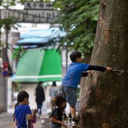 <第5回>子どもを遊ばせるのが難関大への近道