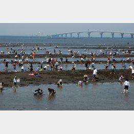 大自然が残る(潮干狩りで有名な盤洲干潟、向こうはアクアブリッジ)/(提供写真)