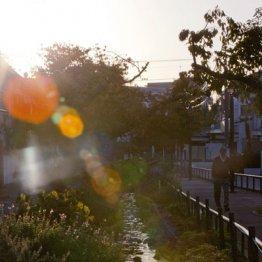 桜の次は新緑か<北沢川緑道>