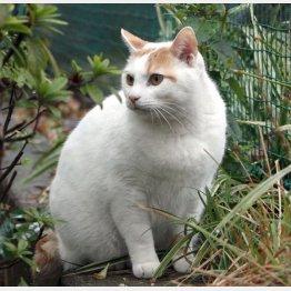 野良猫に悩む自治体は少なくない(C)日刊ゲンダイ