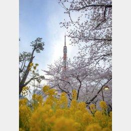 芝公園から東京タワーを望む(C)日刊ゲンダイ