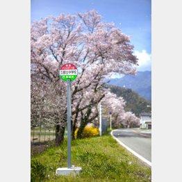 山梨県 身延町久那土の桜