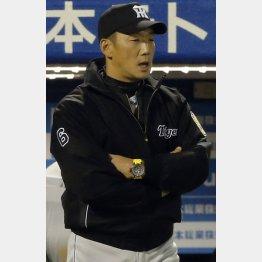 金本監督率いる阪神はNPBに意見書を提出(C)日刊ゲンダイ