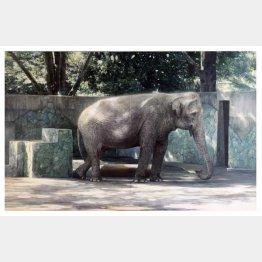 5月に69歳の天寿を全うした象のはな子(C)日刊ゲンダイ
