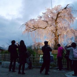 過熱する京都人気 外国人観光客の増加でさらに盛り上がる