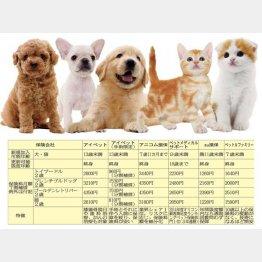 犬種や年齢によって保険料に違い(提供写真)