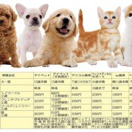 """【タマ】年齢制限有り ペット保険に入るなら""""7歳まで""""に"""