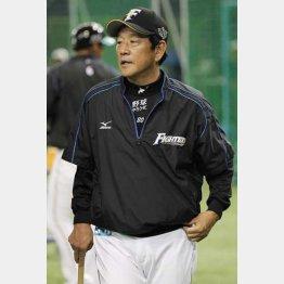 栗山監督の執念は実るのか(C)日刊ゲンダイ