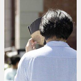 今年も猛暑?(写真はイメージ)/(C)日刊ゲンダイ