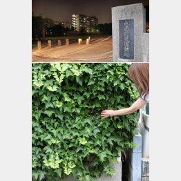 上は特訓の場になった運動場、壁当ての場所を指す母・幸代さん(C)日刊ゲンダイ