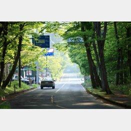 木漏れ日の街道を進む(写真提供・十和田市)