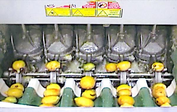 収穫して24時間以内の果汁のみを使用(提供写真)