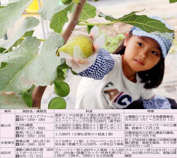 珍しいイチジク狩り(C)日刊ゲンダイ