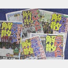 スポーツ各紙のSMAP解散報道(C)日刊ゲンダイ