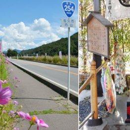 長野県佐久市「コスモス街道」 季節には沿道に4万株が