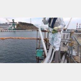 15年6月福島第一原発周辺地下水・海水のモニタリング状況 ~サンプリング風景~(C)東京電力提供