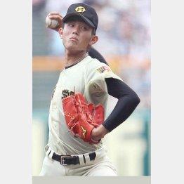 今井は甲子園で計616球投げた(C)日刊ゲンダイ